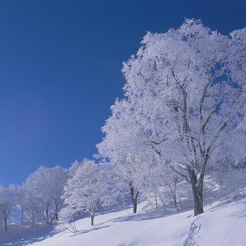ทาคาสึ: มาสนุกกับหิมะและบ้านกระท่อมกันเถอะ !
